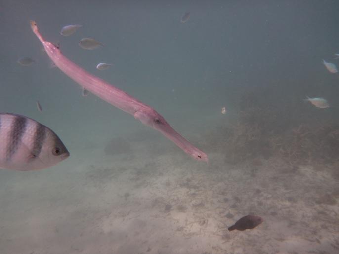 entourés de poissons