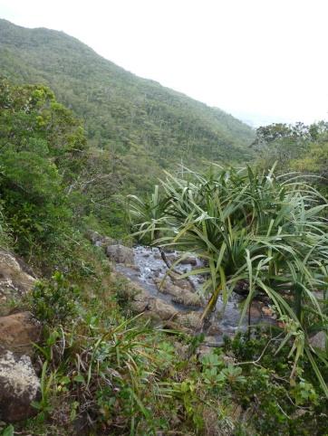 Le parc national de La rivière - noire