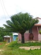 Beau palmier