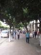 Les belles rues d'Alger avec leurs ficus bien taillés