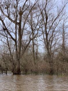 La rivière Atchafalaya