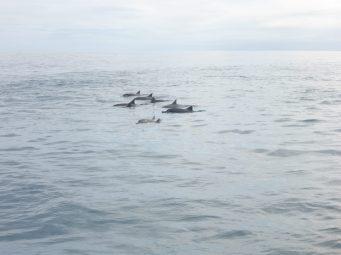 Les dauphins !