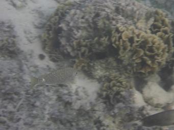 Huahine Polynésie